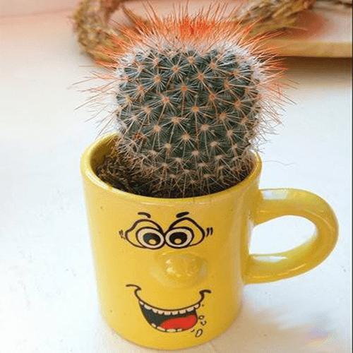 Marturie mini cactus