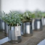 Marturii plante aromatice
