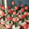 Mărturii mini cactus în ghiveci